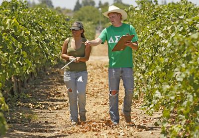 Students Walking Through Vineyard