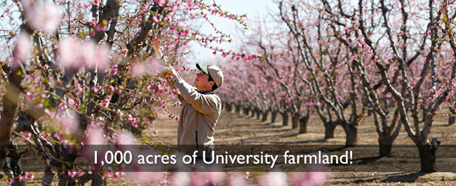 1000 acres of university farmland