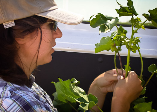 Plant Science Graduate Program