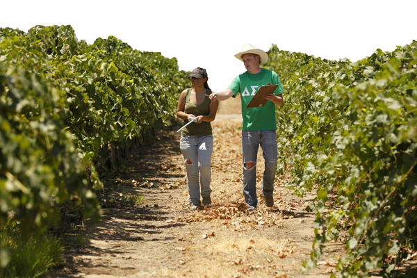 Students walking in vineyard row